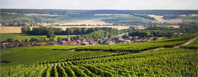 Champagne Alain Suisse Cumières